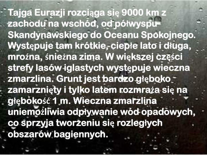 Tajga Eurazji rozciąga się 9000 km z zachodu na wschód, od półwyspu Skandynawskiego do Oceanu Spokojnego. Występuje tam krótkie, ciepłe lato i długa, mroźna, śnieżna zima. W większej części strefy lasów iglastych występuje wieczna zmarzlina. Grunt jest bardzo głęboko zamarznięty i tylko latem rozmraża się na głębokość 1 m. Wieczna zmarzlina uniemożliwia odpływanie wód opadowych, co sprzyja tworzeniu się rozległych obszarów bagiennych.