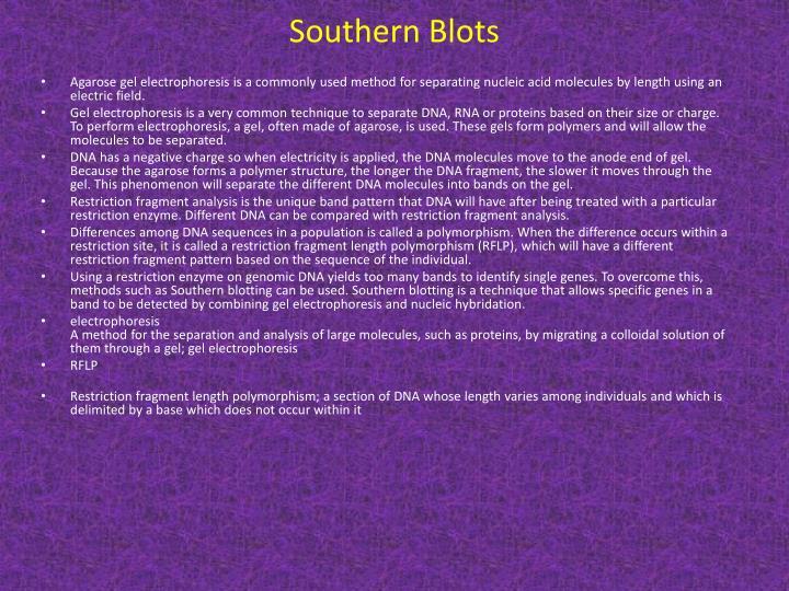Southern Blots
