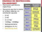 enzimas de restricci n palindrome