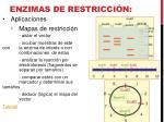 enzimas de restricci n8