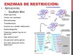 enzimas de restricci n9