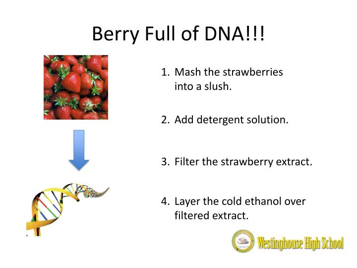 Berry Full of DNA!!!