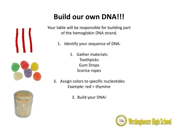 Build our own DNA!!!