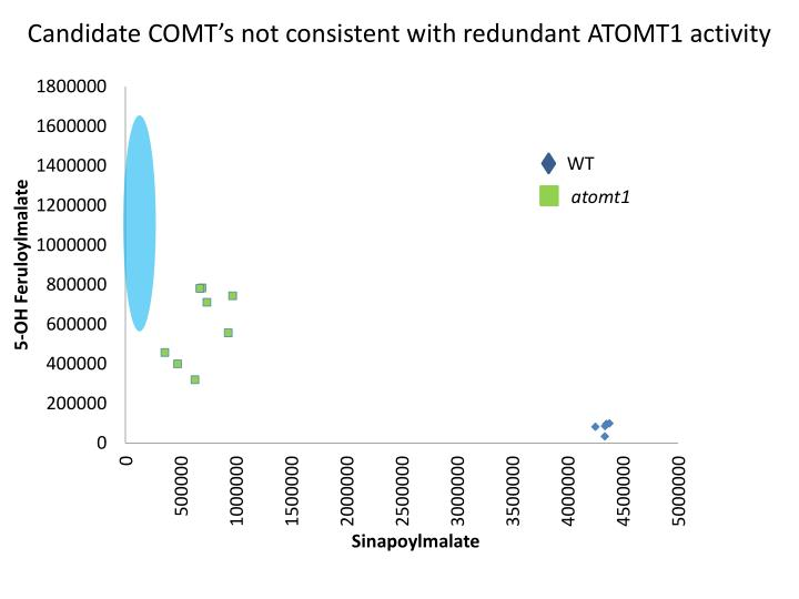 Candidate COMT's not consistent with redundant ATOMT1 activity