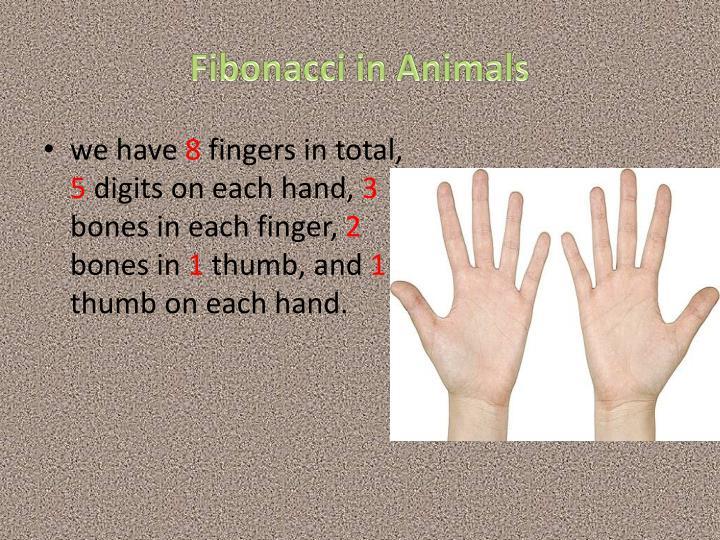 Fibonacci in Animals