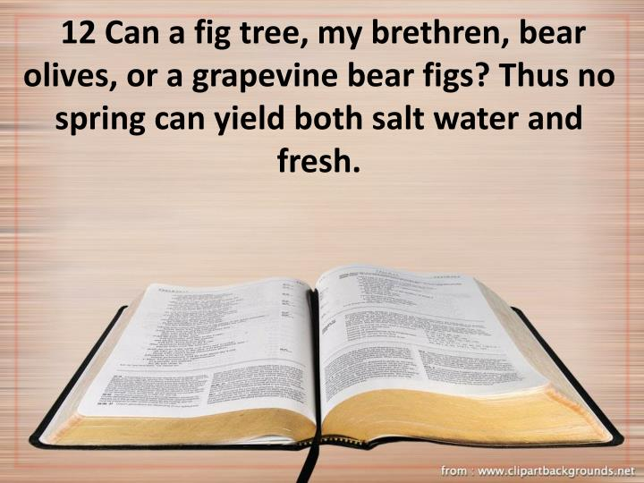 12 Can a fig tree, my brethren, bear olives, or a grapevine bear figs? Thus no spring can yield both salt water and fresh.