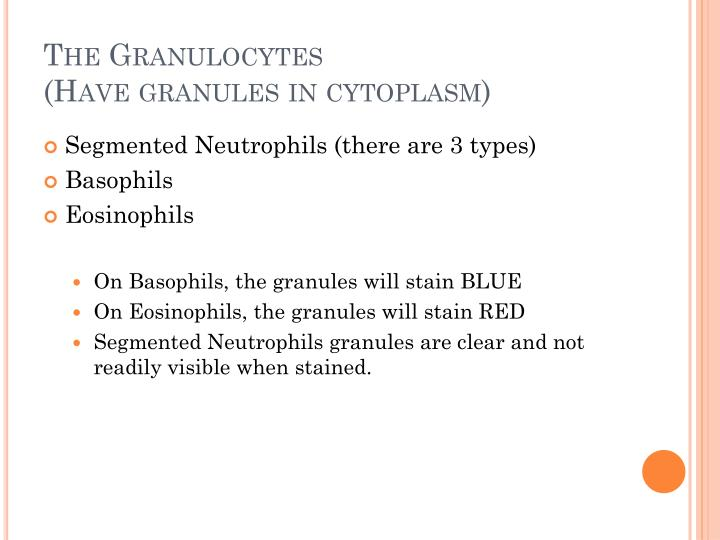 The Granulocytes
