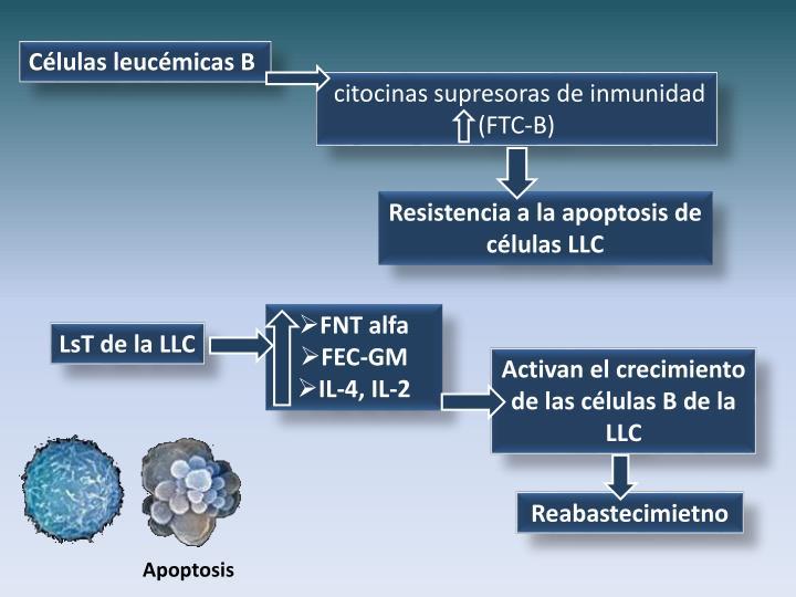 Células leucémicas B
