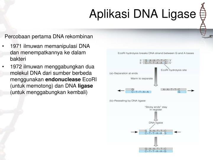 Aplikasi DNA Ligase