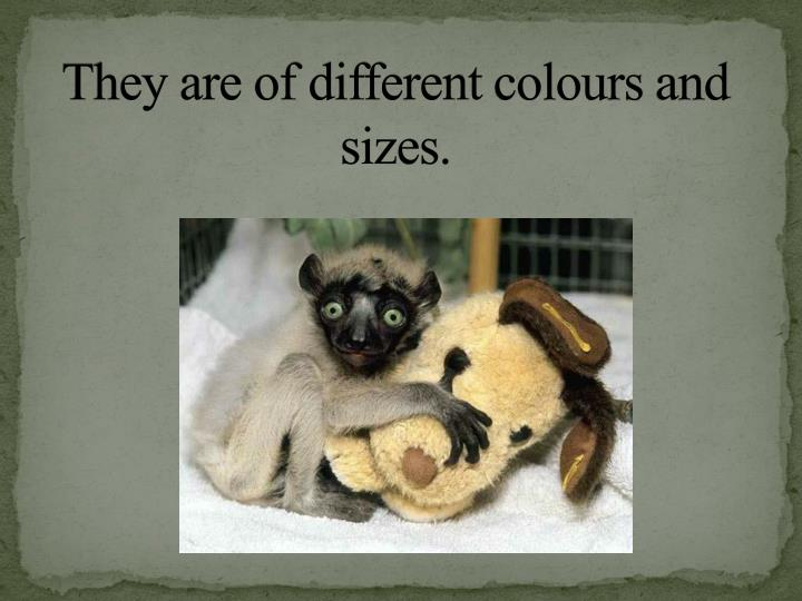 They are of different