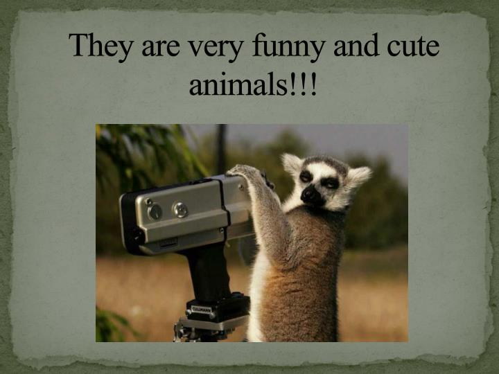 They are very funny and cute animals!!!