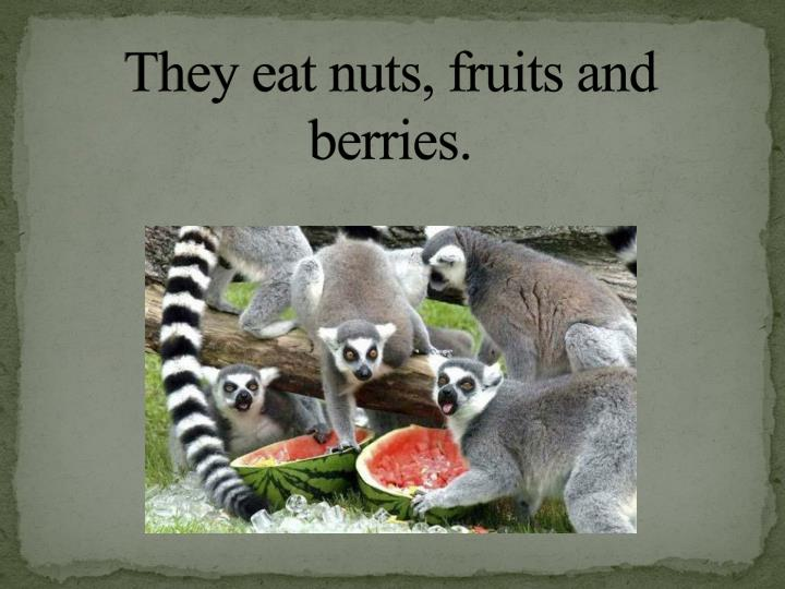 They eat nuts, fruits and berries.