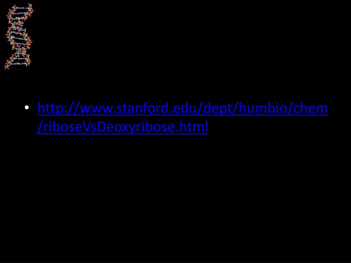 http://www.stanford.edu/dept/humbio/chem/riboseVsDeoxyribose.html
