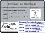 enzimas de restri o1