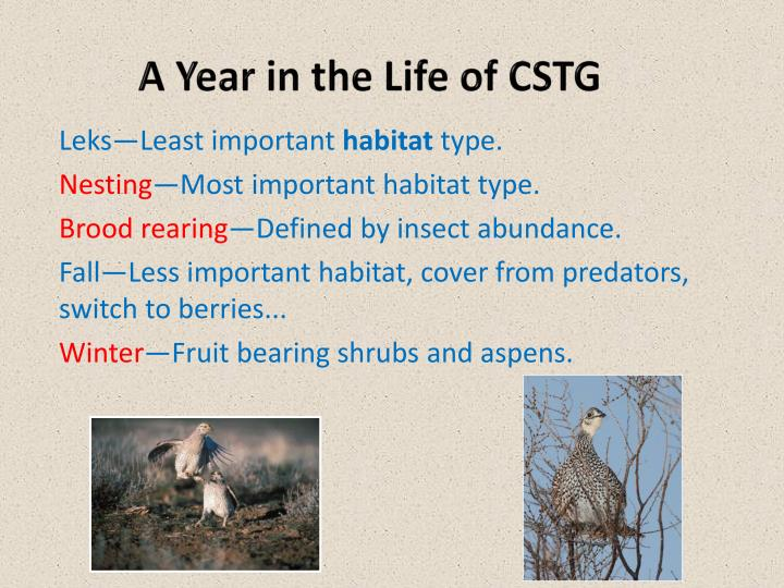 A Year in the Life of CSTG