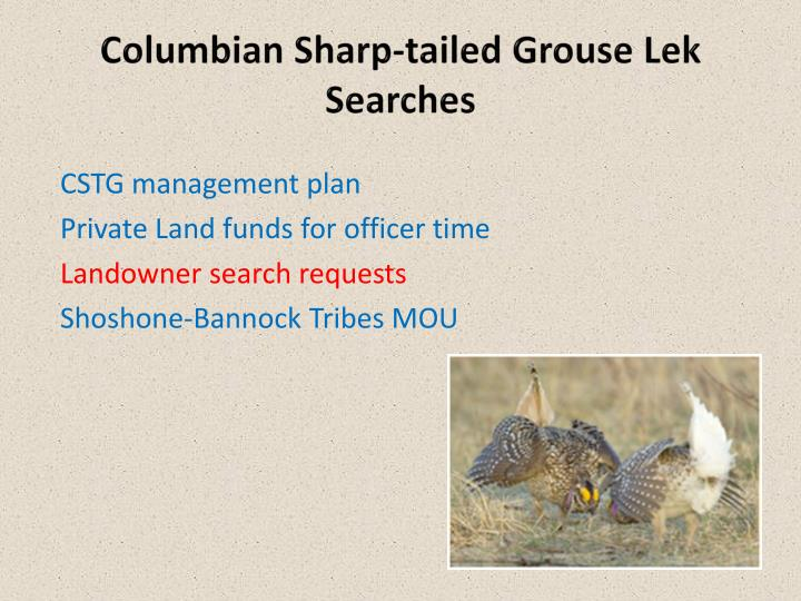Columbian Sharp-tailed Grouse