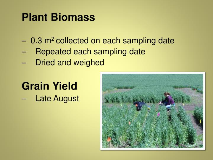 Plant Biomass