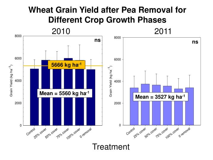 Wheat Grain Yield after Pea Removal for Different Crop Growth Phases