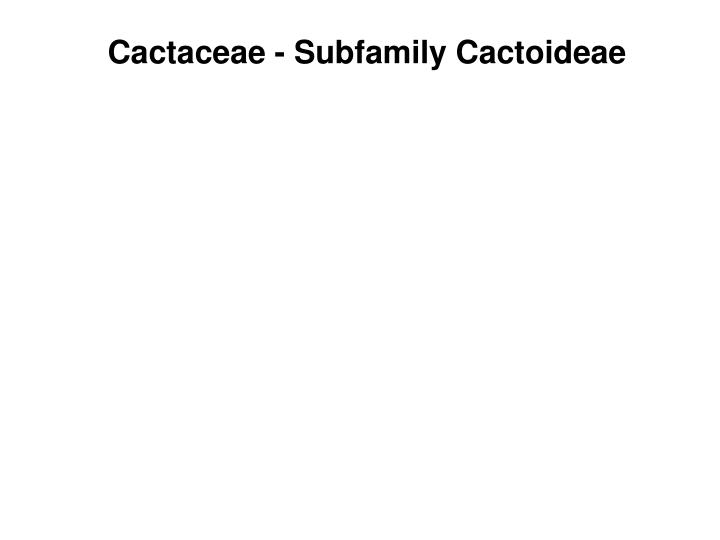 Cactaceae - Subfamily Cactoideae