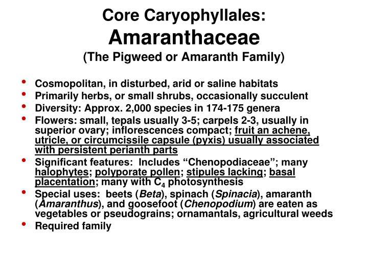 Core Caryophyllales: