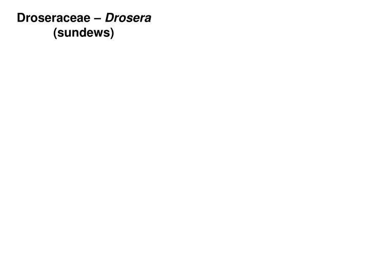 Droseraceae –