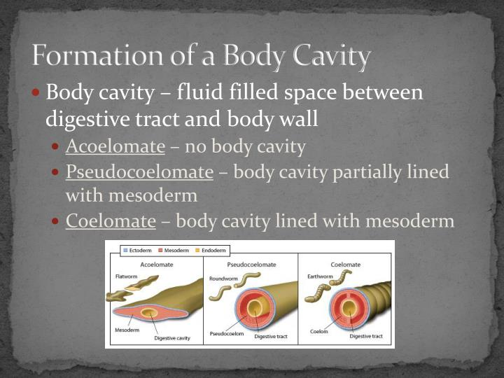 Formation of a Body Cavity