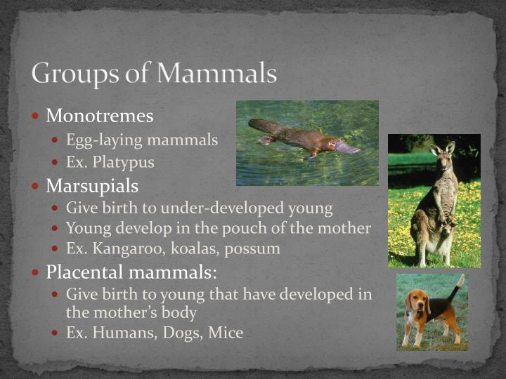 Groups of Mammals
