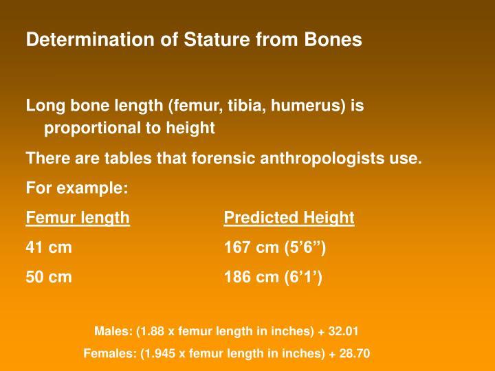 Determination of Stature from Bones