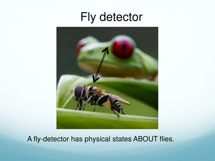 Fly detector