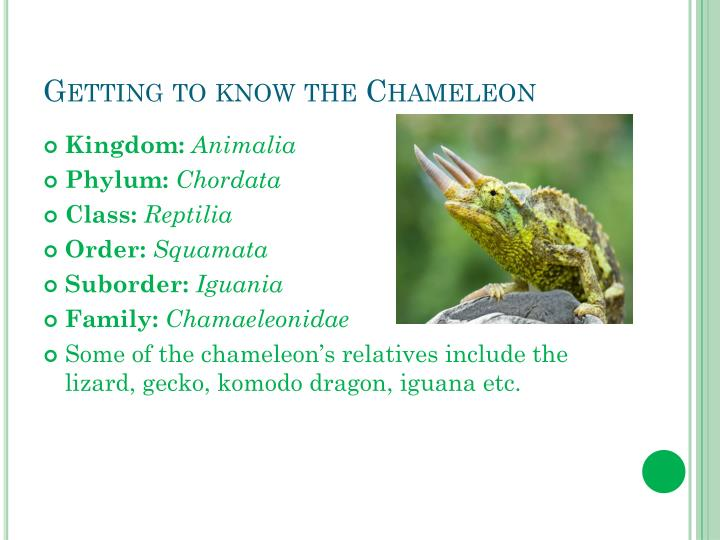 Getting to know the chameleon