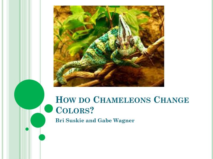 How do chameleons change c olors