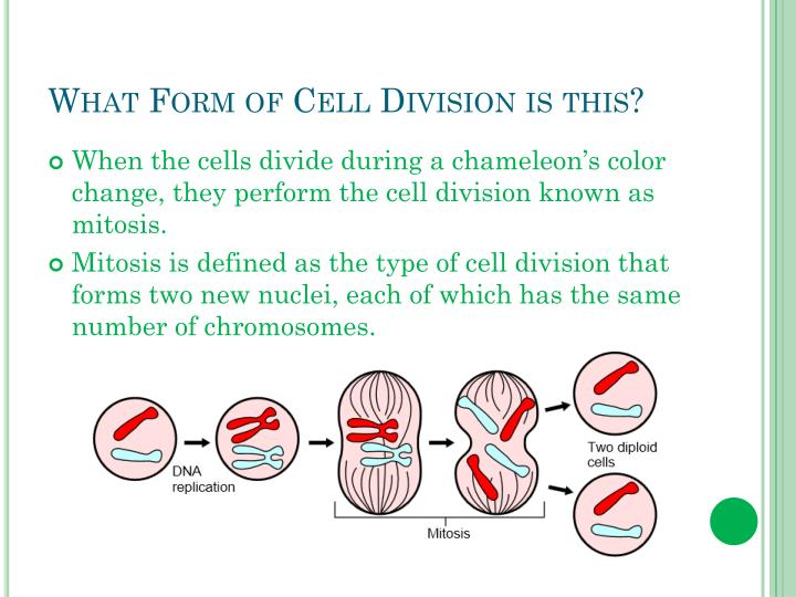 What Form of Cell Division is this?