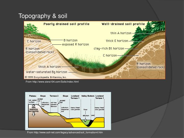 Topography & soil