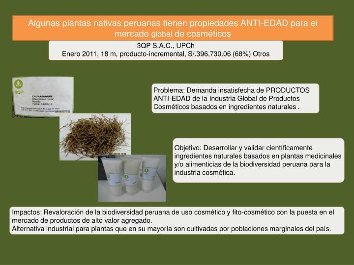 Algunas plantas nativas peruanas tienen propiedades ANTI-EDAD para el mercado