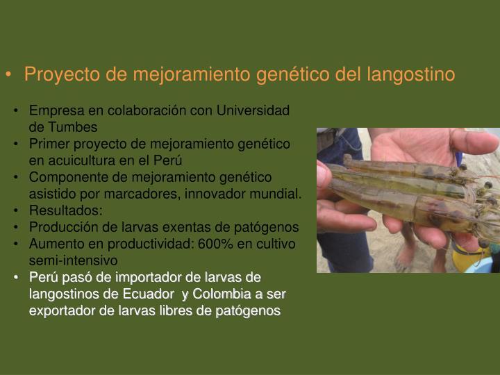Proyecto de mejoramiento genético del langostino