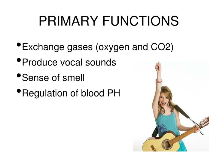 PRIMARY FUNCTIONS