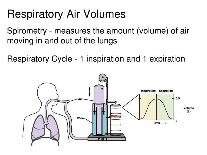 Respiratory Air Volumes