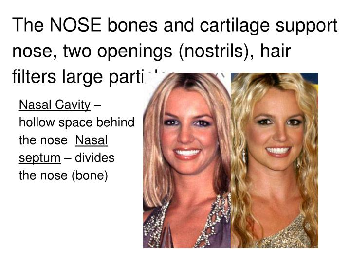 The NOSE bones and cartilage support nose, two openings (nostrils), hair filters large particles