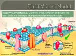 fluid mosaic model1