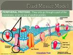 fluid mosaic model5