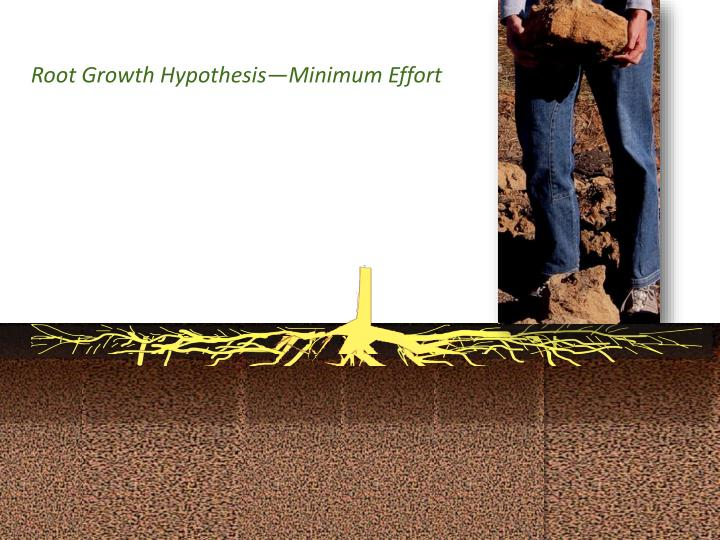 Root growth hypothesis minimum effort