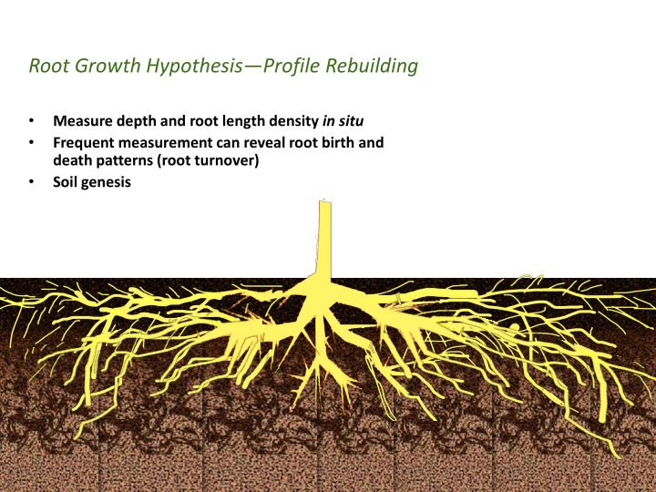 Root growth hypothesis profile rebuilding