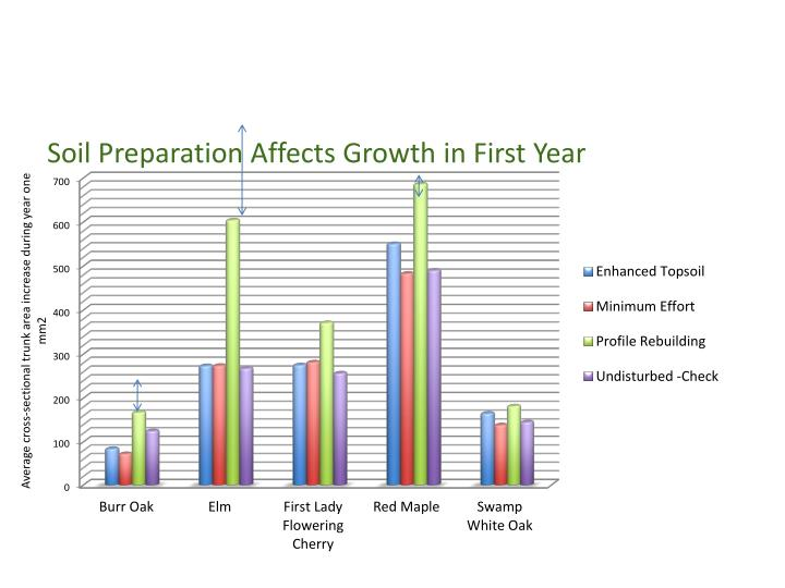 Soil Preparation Affects Growth in First Year