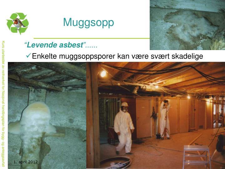 Muggsopp
