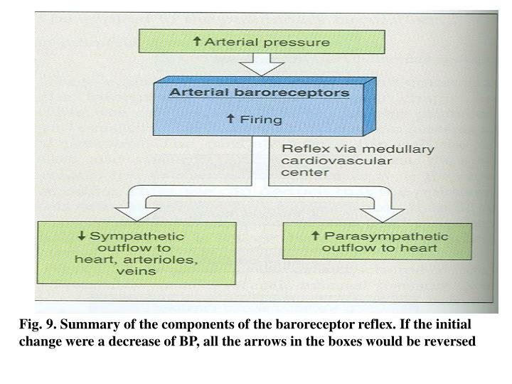 Fig. 9. Summary of the components of the baroreceptor reflex. If the initial change were a decrease of BP, all the arrows in the boxes would be reversed