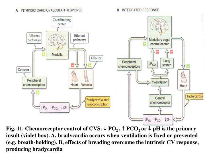 Fig. 11. Chemoreceptor control of CVS.