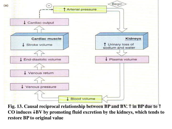 Fig. 13. Causal reciprocal relationship between BP and BV.