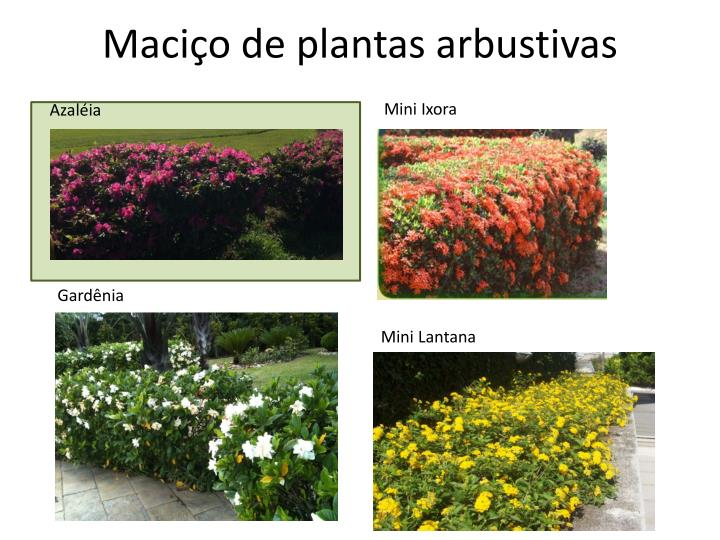 Maciço de plantas arbustivas