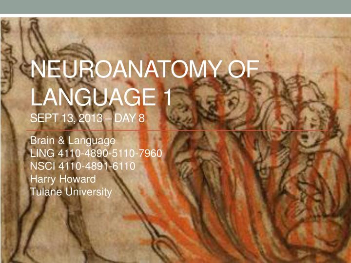 Neuroanatomy of language 1 sept 13 2013 day 8