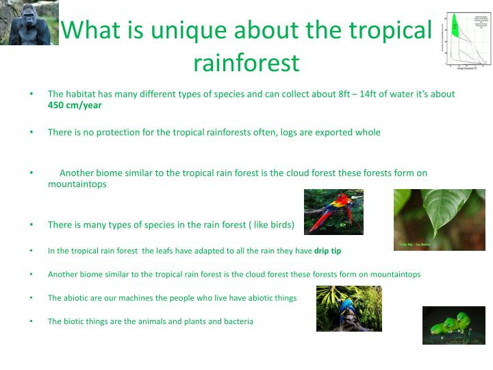 What is unique about the tropical rainforest